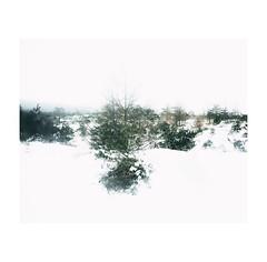 #0184 (Masami H.) Tags: 6x7 film analog mediumformat mamiya7ii kodak portra landscape snow