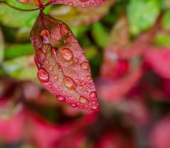Low Perspective. (Omygodtom) Tags: leaves season scene flora red tamron90mm tamron wet water natural nature macro bokeh dof usgs d7000