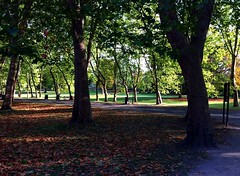 Nature (molsworth11) Tags: autumn trees nature