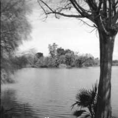 The Origianl Brownie No. 1 -- 04 (oddflute) Tags: kodak original brownie no1 model b 1904 6x6 fomapan 100 contact prints caffenol 117 film tree trees lake pond wind shutter iso50