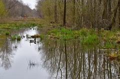 Stream reflections (lauren3838 photography) Tags: dof ilovenature nature landscape d750 nikon georgia ga stream reflection wildlife waterfowl duck