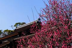 DSC_0139 (ponkiti3) Tags: 下鴨神社 京都 梅 植物 風景