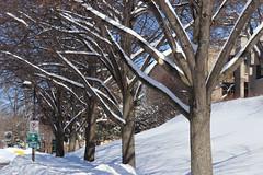 Snow Photos-6