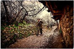 💛     K U R D I S T A N        كوردستان🌟 (Kurdistan Photo كوردستان) Tags: zagros zoregva zazaki zaxo zindî azadî azmar xebat xaneqînê christianity cegerxwin van love mahabad music arbil democracy freedom genocide herêmakurdistanê hawler hewler hewlêr halabja herêma judaism jerusalem kurdistan4all lalish qamishli qamislo qamishlî qasimlo war erbil efrînê refugee revolution rojava referendum yezidism yazidis yârsânism unhcr peshmerga peshmerge grass tree landscape field sky mountain animal forest livestock portra people building night 2019 nature roa wall road کوردستان wood portrait