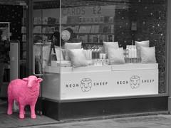 ColourSplash Neon Sheep Shop Front Cambridge Mar 2019 (Uncle Money UK) Tags: coloursplash neonsheep shopfront selectivecolouring cambridge march 2019