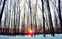 Sunset through hardwoods (yooperann) Tags: snow bare trees sunset shadows shag lake upper peninsula michigan marquette county low sun