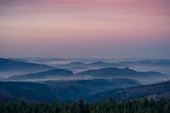 forest series #303 (Stefan A. Schmidt) Tags: warstein nordrheinwestfalen deutschland de forest tree trees bluehour landscape