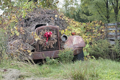 Roadside Relics (Jonnie Lynn Lace) Tags: abandoned america american unitedstates usa trip autocar trucks pickup rust nature takes over decay derelict detail details green red vines trees vehicle old classic history time memories texture textures nikkor nikon d750 digital lens perspective light day roadside relic rusty natur fall autumn ruins vintage exploration grass truck windshield wood car 50mm wreath christmas naturetakesover