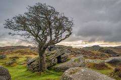 Emsworthy Rocks - Dartmoor (pm69photography.uk) Tags: emsworthyrocks emsworthy devon dartmoor trees tree aurorahdr2018 moody atmospheric atmosphere sony sonya7r3 ilovedevon ilovedartmoor sony24mm14gm
