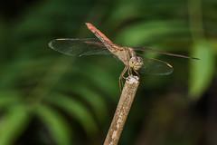 D75_6731 (crispiks) Tags: nikon d750 105mm f28 micro r1c1 albury botanical gardens new south wales