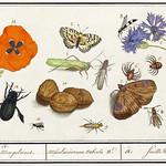 Nature ensemble in vintage style thumbnail
