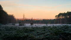 Frosty sunrise (beeveephoto) Tags: nikond800e 50mmf14g nikkor50mm14gafsd sunrise sky clouds trees shrubs frost 81b leefilters flanders belgium halle nohdr outdoor winter plants nature landscape field