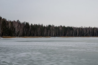 The frozen lake in the winter forest