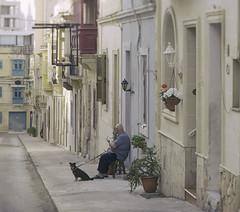 Friends (Pawel Wietecha) Tags: friend malta sliema street city buildings color dog portrait style mood atmosphere calm silence travel trip