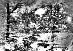 There's no time like SNOW time! (soniaadammurray - On & Off) Tags: iphone blackwhite manipulated experimental collage picmonkey photoshop abstract collaboration martabader snow trees snowing white winter switzerland landscape nature artchallenge artweekgallerygroup ~~~abstractnature~~~ art myart visualart experimentalart abstractart