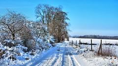 Winter to the two road side (Szymon Karkowski) Tags: outdoor winter snow road tree trees bushes fields fence blue sky landscape nature silesian voivodeship gliwice poland nikon d7100