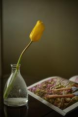 Light Reading (flashfix) Tags: march282019 2019inphotos flashfix flashfixphotography ottawa ontario canada nikond7100 40mm tulip floral magazine vase flower single table simple minimal stilllife