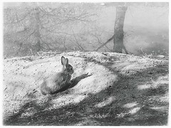 A day in the life of a rabbit (motocchio) Tags: visualpoetry poetic rabbit coniglio ウサギ