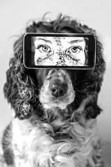 """Watch Dog"" (tonyajbender) Tags: picception dog pet bestfriend eyes freckles cameraphone human photochallenge2019 trevorcarpenterphotochallenge conceptualism"