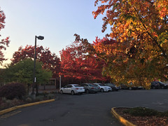 2018 YIP Day 295: Leaves (knoopie) Tags: 2018 october iphone picturemail 2018yip project365 365project 2018365 yiipday295 day295 autumn fall redmond