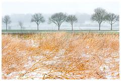 Une touche de couleur (Pascale_seg) Tags: landscape paysage neige snow neve hiver winter field countryscape moselle lorraine france grandest nikon arbre tree route nationale