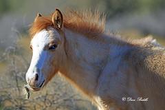 Don't stick your nose where it don't belong (littlebiddle) Tags: arizona tontonationalforest coonbluff desert