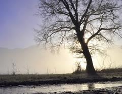 Ombres chinoises 2 (Evim@ge) Tags: lumière lighty lumineux hiver winter chemin track lane arbres trees brouillard glacé icy sun soleil leverdesoleil aube grésivaudan