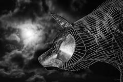 Wolf Moon (Gordon Mackie) Tags: wolfburn wolfmoon moon sculpture thurso caithness