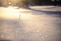 S.O.S. (Snow on Snow) (flashfix) Tags: january302019 2019inphotos flashfix flashfixphotography ottawa ontario canada nikond7100 40mm bokeh snow needle sunshine light blowing wind nature hbw mothernature winter brr shine sparkle winterscape