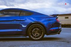 project-6gr-10-ten-2018-gt-bronze-08 (PROJECT6GR_WHEELS) Tags: project 6gr 10ten ford mustang gt 2018 color combo gold wheels bronze gloss black rims rim wheel lightning blue shelby gt350 gt350r