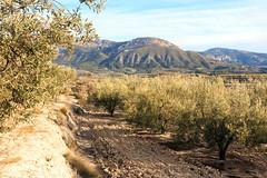 IMG_2130 Landscape Gorga (jaro-es) Tags: canon españa eos70d landschaft landscape nature natura natur naturewatcher naturemaster naturesfinest oliva olive olea bergen montañas mountains