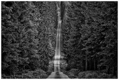 Tsjechie Branka Road to nowhere (marc.demeuleneire) Tags: road forest bw trees czech