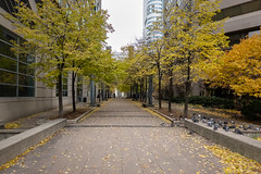 Trying to Keep Warm (Jocey K) Tags: sonydscrx100m6 triptocanada ontario canada autumn toronto city highrise clouds sky buildings architecture birds pigeons leaves trees autumncolours
