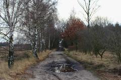 Hageven (*spectator*) Tags: hageven belgium belgie trees