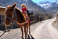 Mountain ride (stephenbarber) Tags: morocco vacation travel africa family mule donkey hike mountain atlas