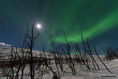 Above the Shaking Trees (kevin-palmer) Tags: sweden swedishlapland europe arctic march winter snow snowy cold nikond750 björkliden night sky stars starry space astronomy astrophotography moonlight moonlit evening aurora auroraborealis northernlights green colorful moon scandinavianmountains skiresort sigma14mmf18