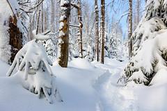 Winterweg (Foto-Wandern.com) Tags: schnee deutschland winter jahreszeiten nationalparkharz wasser oberharz westharz natur harz germany lowersaxonia niedersachsen tourismus upperharz snow tourism fotokurs fotowanderncom fotowandern