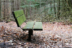 parkbench (Rebecca Evelynn) Tags: sky lakeontario benches chickadee barredowls naturephotography presquileprovincialpark waves crazyclouds ice ducks woodpeckers floating islands bigrock moss greenmoss