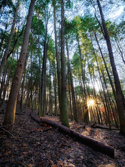 Evening Traipse (Christopher W Gilbert) Tags: fujifilm fuji xseries gfx50s 23mm sunset starburst landscape landscapes sunflair sunburst trees tranquil