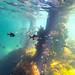 St Leonards Pier Underwater-29