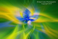 -  Phacelia - Green-Lighten - 110 (Bridget Calip - Alluring Images) Tags: 2017 alluringimagescolorado bridgetcalip californiawildflowers californiapoppies colorful eltororoad lakeelsinore phacelia walkercanyon abstract allrightsreserved copyrighted digitalart flowers fractals kaleidoscope spring surreal swirls twirls vibrant