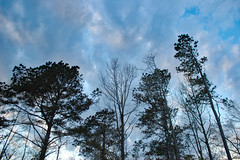 Clouds Above The Trees. (dccradio) Tags: lumberton nc northcarolina robesoncounty outdoor outdoors outside nature natural sky tree trees woods wooded forest march monday spring springtime evening mondayevening goodevening nikon d40 dslr cloud clouds