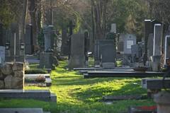 IMG_8487 (Pfluegl) Tags: wien vienna zentralfriedhof graveyard europe eu europa österreich austria chpfluegl chpflügl christian pflügl pfluegl spring frühling simmering