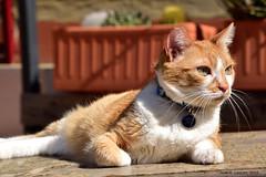 DSC_0085_02 (Juan R. Lascorz) Tags: haustier haustiere mascotas mascota pet pets animaldecompagnie animauxdecompagnie