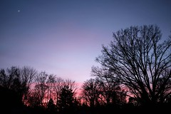 Pinkening sky and a crescent moon (Jay Murdock) Tags: sunsetsky clouds pink moon trees