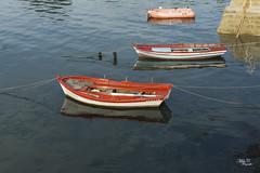 Esperando nueva pesca...!!! (Camelia-5) Tags: maniños coruña atlántico