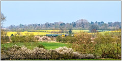 Spring tour (Peter Leigh50) Tags: class 37 374 locomotive diesel ee type 3 leicestershire engine landscape landschaft line midland main wistow spring april rape seed oil train trees track hedge canal railway railroad rail rural sunshine colour countryside farmland field fujifilm fuji xt2 blackthorn sloe