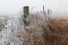 Freezing Fog (boom_goes_the_canon) Tags: winter frost hoarfrost fog landscape ditch eerie mysterious mystical