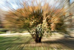 I finally got it! 😅 ¡Al fin lo conseguí! (marisabosqued) Tags: movimientodezoom zoommovement zooming zoomunfocused desenfoquedezoom árbol tree tamronafsp1750mm snapseed