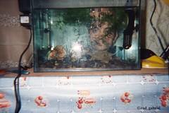 Fish tank - film taken with Sontec focus free SC-238 (cod_gabriel) Tags: fishtank aquarium fish film sontecfocusfree sontecfocusfreesc238 analog analogue sontec lomography lomografie